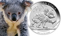 The Australian Koala Series Celebrates 10 Years!