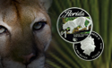 ModernCoinMart (MCM) Releases Florida Panther Coin Same Day That A Real Florida Panther Was Released Back Into Wild